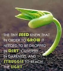 Seeds, Seeds, Seeds (3/3)